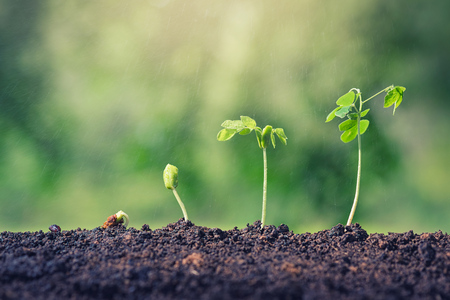 Plant seed growing concept. Water, rain water plants. Plants need water. Small plants. Plants make the world cooler. Edible plants. Plant trees make air freshener. Closeup plant on green background. 写真素材