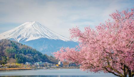 富士山と日本の河口湖の桜。