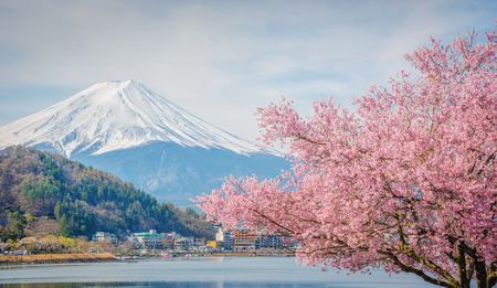 Mount fuji and sakura at lake Kawaguchiko in Japan.