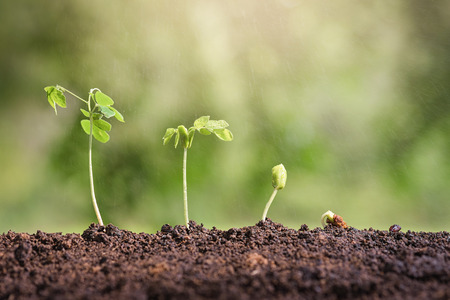 Plant seed growing concept. Water, rain water plants. Plants need water. Small plants. Plants make the world cooler. Edible plants. Plant trees make air freshener. Closeup plant on green background. Stock Photo