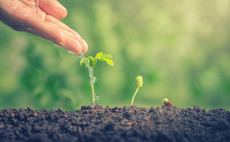 Des mains arrosant des plantes vertes. La croissance des plantes Les plantes ont besoin d'eau. Petites plantes Les plantes rendent le monde plus frais. Plantes comestibles. Les arbres de plantes font un assainisseur d'air. Closeup plante sur fond vert. Banque d'images - 75397995
