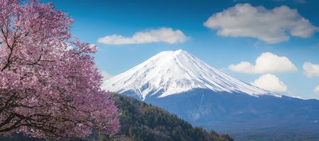 Mountain Fuji and pink Cherry blossom Sakura tree on blue sky white clound in Kawaguchiko, Japan ,Cherry blossom Sakura. Mount Fujisan beautiful landscapes. Stock Photo