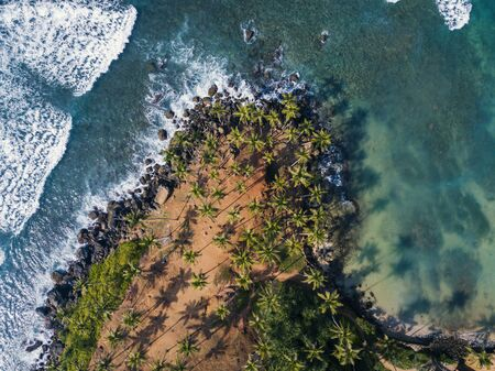 Aerial top view of Scenic Coconut tree hill in Mirissa, Sri Lanka