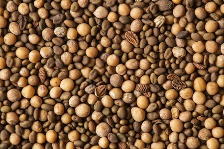 manure: the green manure mix seeds close up Stock Photo