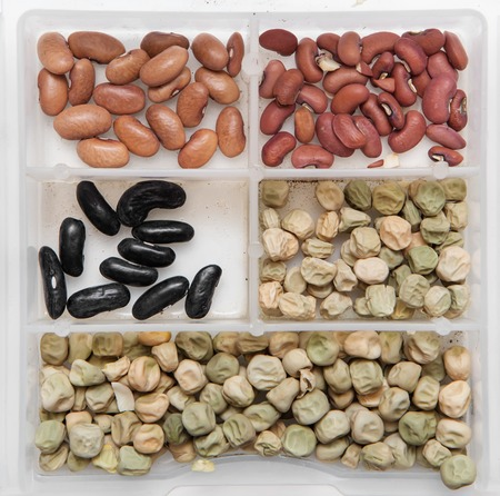 haricot: cowpea haricot and pea seeds in white box Stock Photo