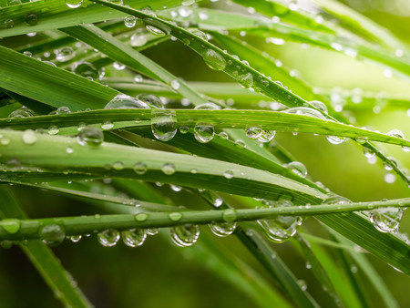 Green leaf with raindrops in the summer in nature develops in the wind Zdjęcie Seryjne