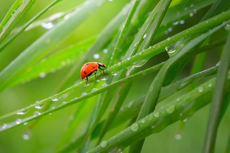 Ladybug in the field Reklamní fotografie
