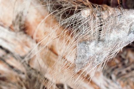 fibrous: Palm bark, coir. Fibrous strands. Photo with selective focus.