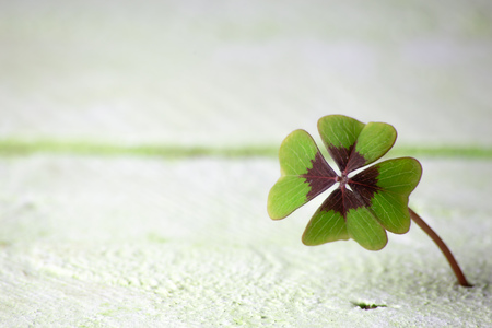 a four-leaf clover grows from wood underground, background concept