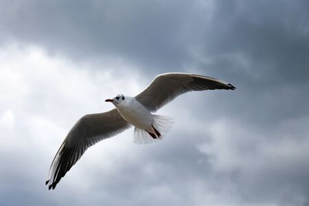 Close up of a gull flying on the sky Stock fotó
