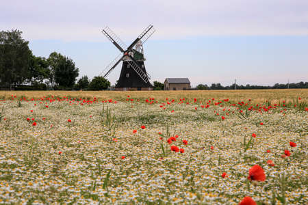 Windmill and poppy field on a sunny Day 写真素材