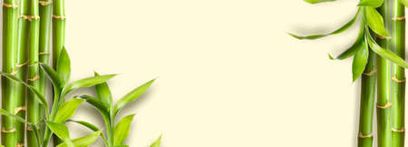 Green bamboo branches on yellow background space for text 写真素材
