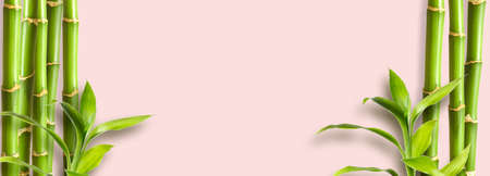 Flat background. Green bamboo branches on pink background space for text