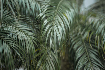 Tropical palm leaves, floral green background, real photo 写真素材