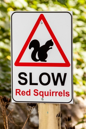 Slow Red Squirrels warning sign in Cumbria, England Stock Photo - 24462146