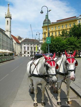 Tourist horses in the street of Vienna Stock Photo - 9234413