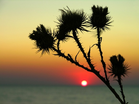 Thistle flower with sunset background photo