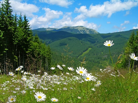 Carpathian mountains in summer, Bukovel resort, Ukraine Stock Photo