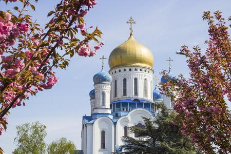 church flower: Orthodox Cathedral of Christ the Savior with sakura spring blossom in Uzhgorod, Ukraine