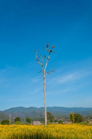 arbre mort: Arbre mort