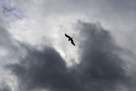 Soaring Seagull in Stormy Sky
