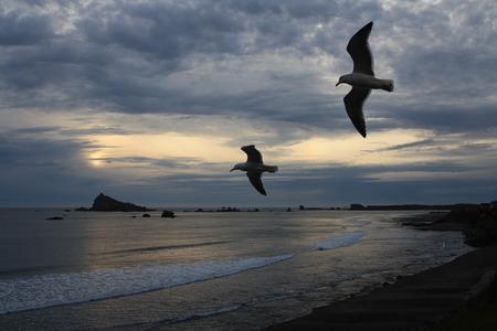 カモメと嵐の太平洋の夕日の空