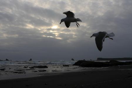 カモメと嵐の夕日