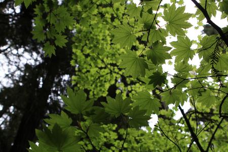 Tree Leaves 写真素材