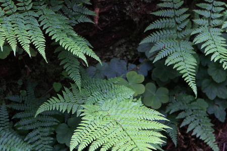 Forest Ferns 写真素材
