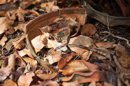 hojas secas: hojas secas en el jard�n