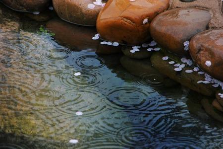 drop in: rain drop in the pond