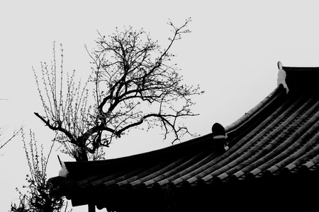 silhouette roof in black and white