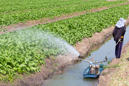 A man working at vegetable garden, watering by water pump on boat in small canal