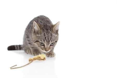 gazing: Tabby or Kitten squat and gazing on white background near dry flower. Stock Photo
