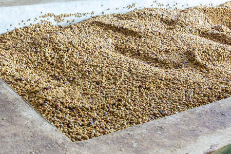 shelling: After going through the process of shelling beans. It has a coffee crust Then washed before being dried.