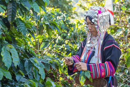 arbol de cafe: Mujer ind�gena con la ropa hecha de plata y poblar en la parte norte de Tailandia Foto de archivo