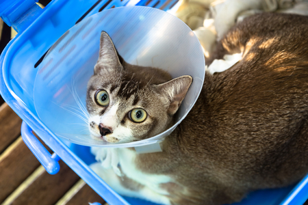 The cat was injured and put the collar sitting in the blue basket to see a doctor