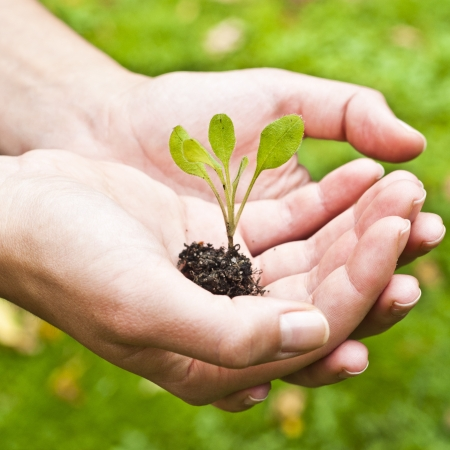 Young plant in hand against green nature background  Shallow depth of field Stock Photo - 15818061