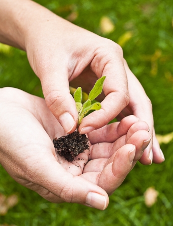 Young plant in hand against green nature background  Shallow depth of field Stock Photo - 15818064