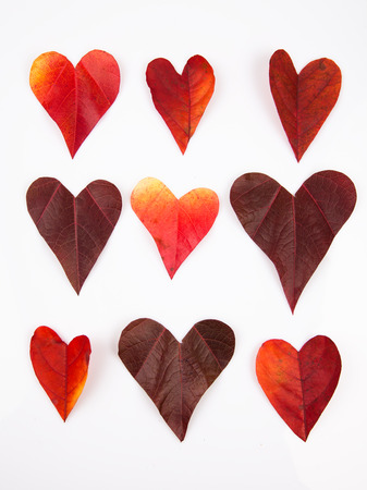 Heart shaped leaves background Stock Photo