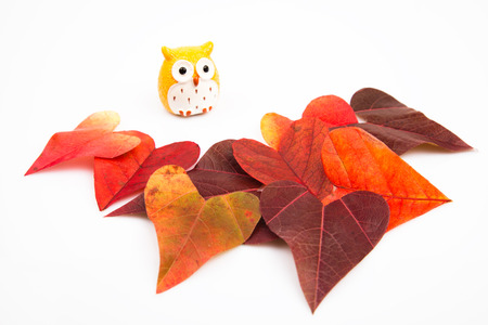 attac: Heart shaped leaves and an owl background Stock Photo