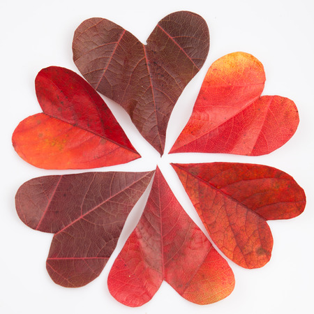 Heart shaped leaves in a radial arrangement background