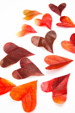 attac: Heart shaped leaves background Stock Photo
