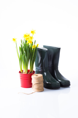 garden boots and yellow daffodils in red pot photo