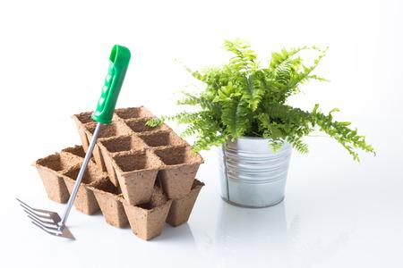 metal pot, rake, green plant, peat pot photo