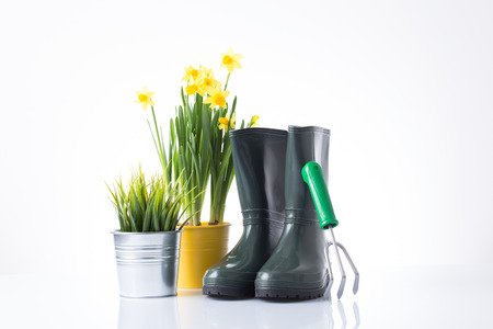 replanting: Garden equipment with green plant against a white background  Stock Photo
