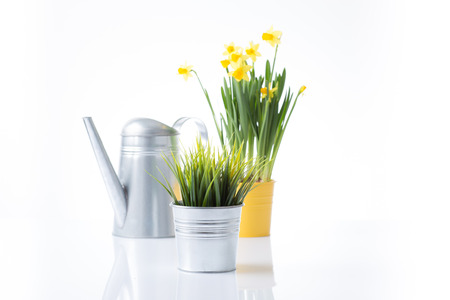 Metal pot, daffodils and watering can photo