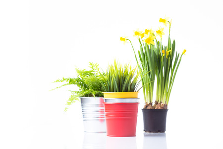Garden concept colorful pots