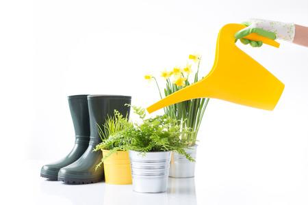 Spring watering photo
