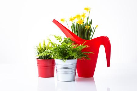 Red watering can and flowers isolated on white photo